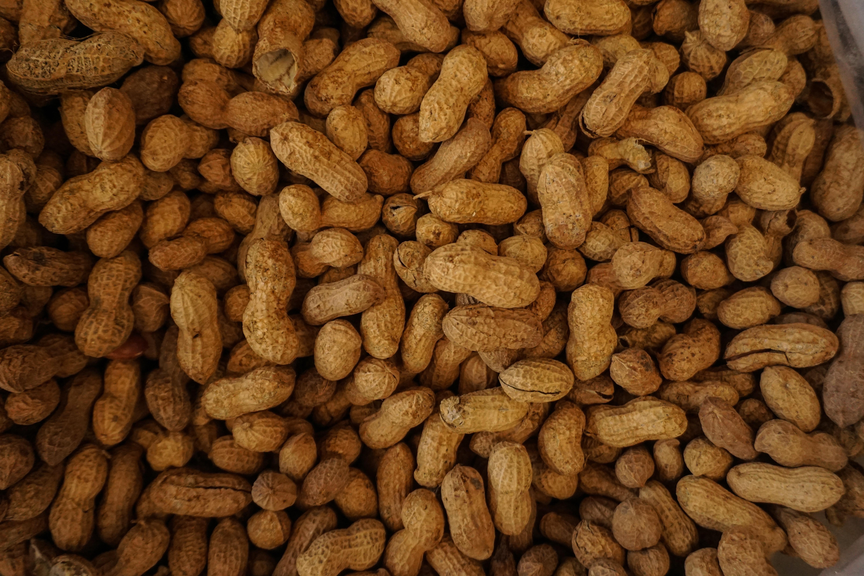 Cacahuètes grillées avant de faire du beurre de cacahuètes
